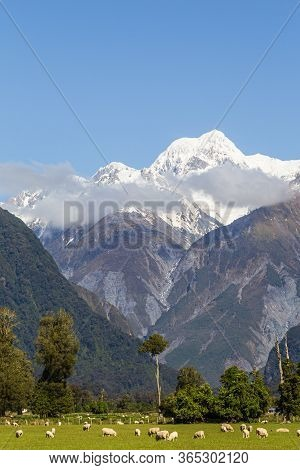 Southern Alps. Two Mount On One Shoot. Mount Cook And Mount Tasman. South Island, New Zealand