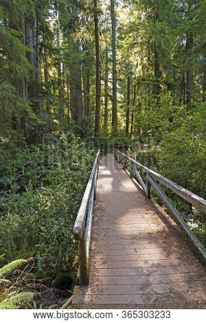 Secluded Bridge In The Redwood Forest In Jedidiah Smith Coastal Redwoods State Park In California
