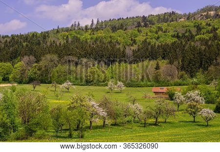 A Green Mountain In The Black Forest In Germany