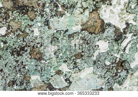 Abstract Colorful Cement Wall Texture. Grunge Background. Old Wall Background For Design.