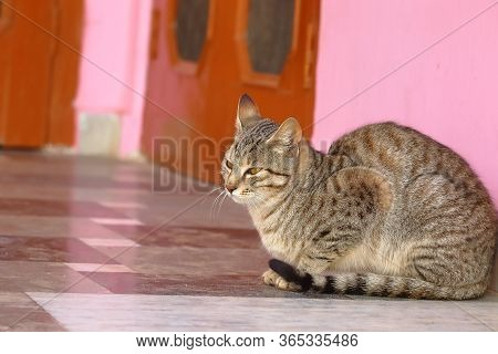 Cat Sitting On Surface Of Marble At Home, Cat Image, Domestic Cat Background, Close Up Of Cat , Cat