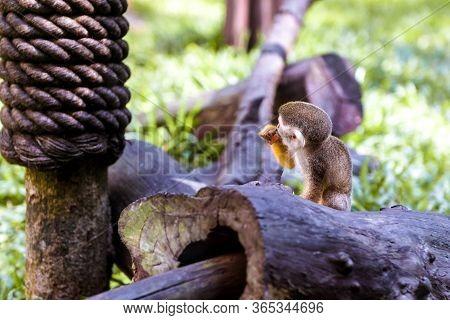 Little Funny Monkeys Eat On Twigs. Monkeys And Monkeys In The Green Garden.