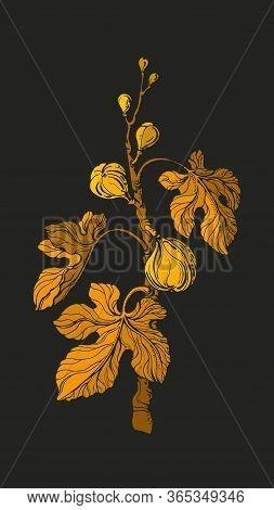 Fig Tree. Vector Vintage Golden Branch, Fruit, Leaf. Art Illustration On Black Background. Botanical