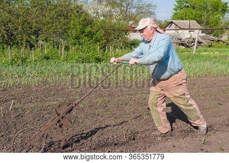 Elderly Ukrainian Senior Peasant Working With Hand Plough In Kitchen Garden At Spring Season
