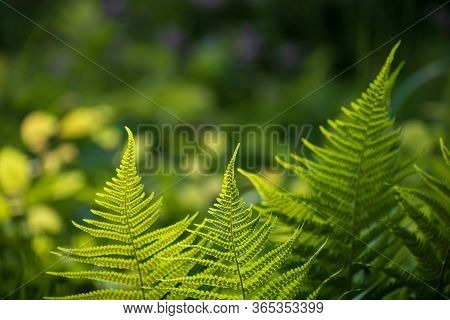Beautiful Insolated Fresh Verdant Juicy Leaves On Bright Multicolored Floral Background