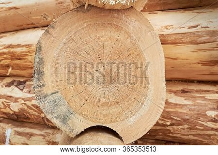 Wood Structure Background. Lumber Industrial Wood Texture, Timber Butts Background. Butt End Of A Pr