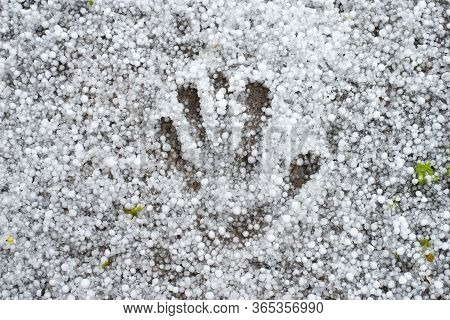 Palm Footprint On The Ground Strewn With Hail. A Strong Thunderstorm With Hail