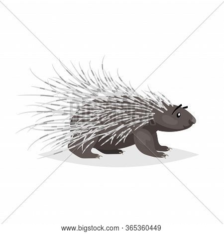 Cute Cartoon Porcupine. North America Wild Animal. Vector Drawing For Kid And Child Books. Isolated