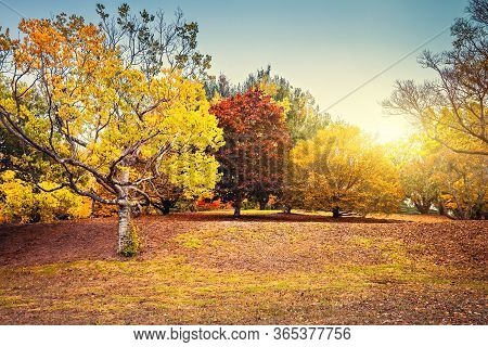 Beautiful And Peaceful Autumn Scene With Colourful Trees In The Park, Adelaide Hills Region, South A