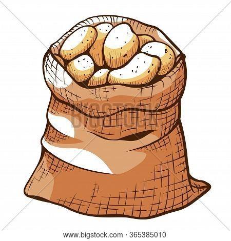 Brown Jute Bagful Of Ripe Potatoes. Canvas Sack Of Root Vegetables.
