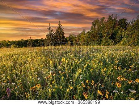 Colorful Spring Wildflowers At Dawn In Rural Texas