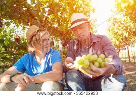 Winemakers Father And Son In Vineyard. Family Winery Business. Winegrower Man In Straw Hat Examining