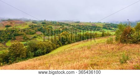 Forest On Mountain In Mist At Sunrise.  Autumn Landscape With Rural Fields On An Overcast Weather Da