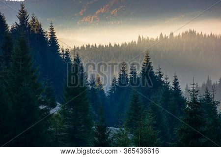 Forest Landscape In Fog. Mountain Behind The Glowing Mist In Valley. Pine Trees Silhouettes On The H