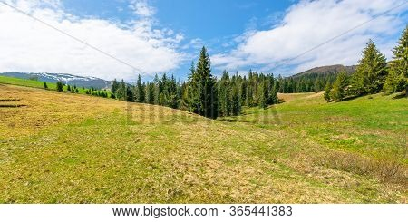 Forest On The Grassy Meadow In Mountains. Beautiful Sunny Panorama Of Mountainous Countryside. Fluff