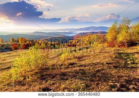Autumn Sunrise In Mountainous Rural Area. Trees In Golden Foliage On The Meadow In Weathered Grass.