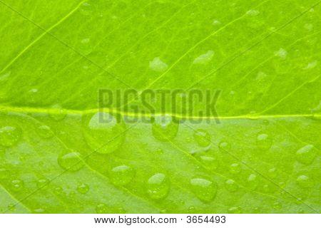 A Photo Macro Of Leaf Green