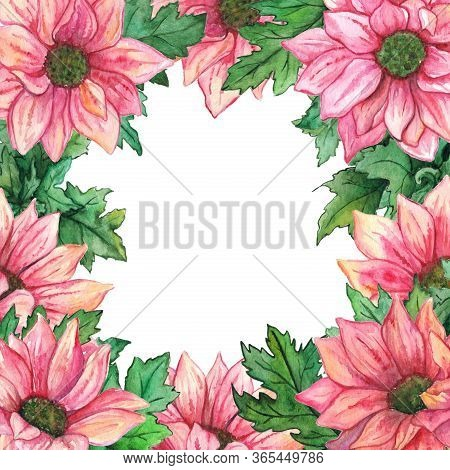 Watercolor Pink Chrysanthemum Green Leaf Flower Composition Frame Border Template Background Isolate
