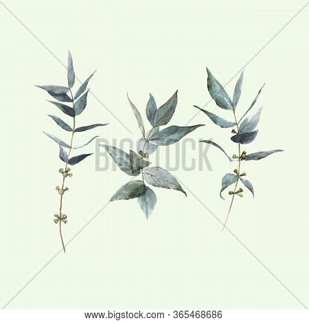 Beautiful Vector Stock Illustration With Watercolor Hand Drawn Laurel Plant Set.