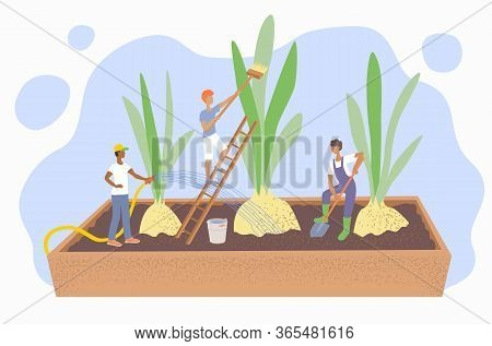 The Concept Of Gardening And Agriculture. People Care For Plants: Water And Loosen The Soil. Bulbs W