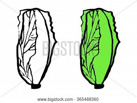 Set Chinese Cabbage In Doodle Style Isolated On White Background. Vector Hand Drawn Outline And Silh