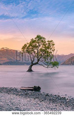 Twilight At Queentown Alone Tree Wanaka Lake, New Zealand Natural Landscape