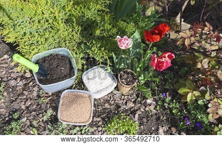 Soil Mixture Components In Bowls For The Preparation Of A Fertile Substrate For Planting Seeds And T