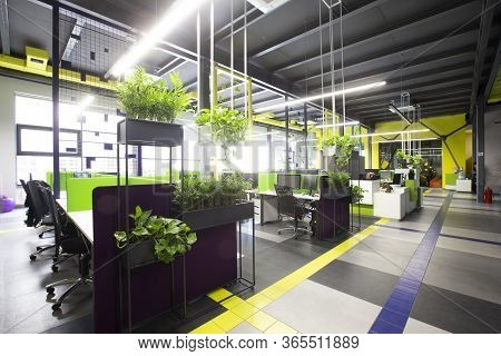 World Pandemic, Coronacrisis. Empty Workplaces In Modern Office With Plants, Rental Office
