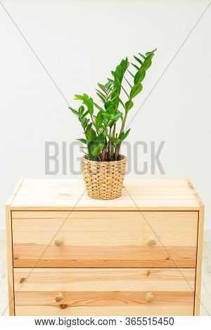 Zamioculcas. On Wooden  Shelf.  Room Decoration. Vertical Format