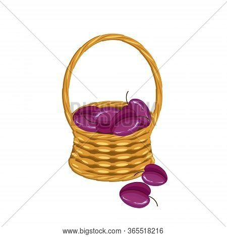 Plum In Basket Wicker With A Vine. Violet Fruit Art Design Elements Object Isolated Stock Vector Ill