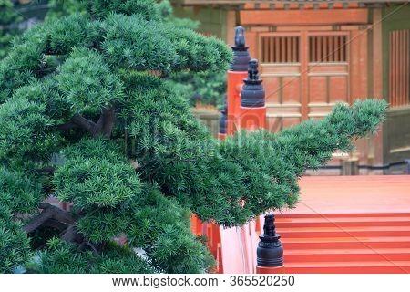 31 May 2008 The Plant At Nan Lian Garden, Hong Kong