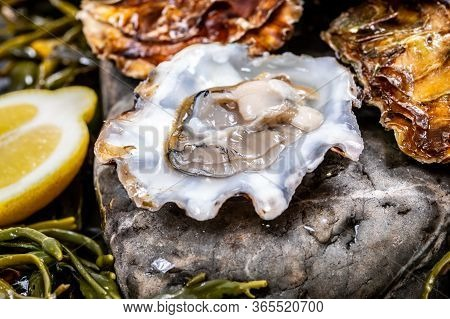 Fresh Open Zeeuwse Creuse Pacific Or Japanese Oysters Molluscs On Fish Market In Yerseke, Netherland