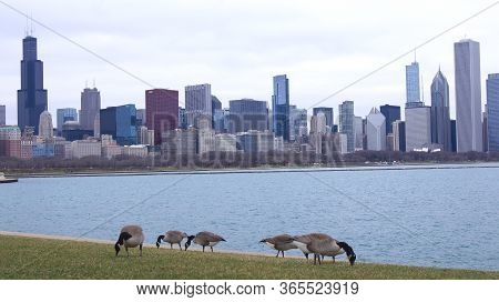 Chicago, Illinois, United States - Dec 11th, 2015: Chicago Skyline As Seen From The Adler Planetariu