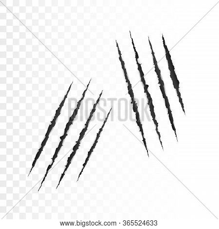 Wild Animal Claws Scratches. Scary Laceration Paper Surface. Torn Paper Edge. Vector Illustration