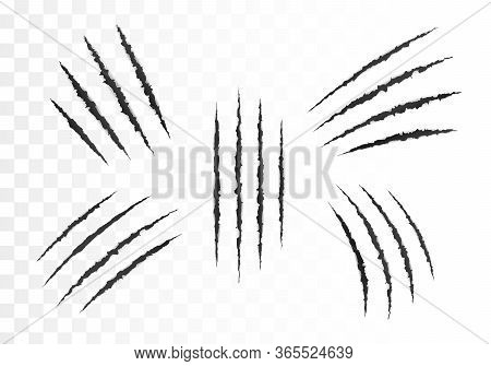 Scary Laceration Paper Surface. Set Of Wild Animal Claws Scratches. Torn Paper Edge. Vector Illustra