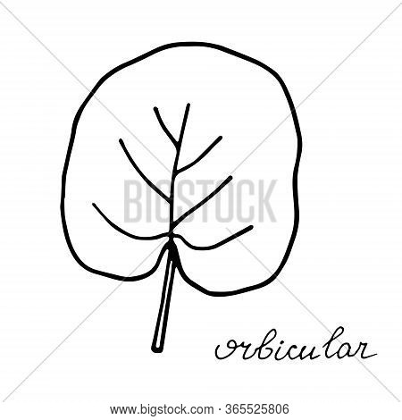 Hand Drawn Doodle Leaf. Black Shape With Different Forms. Orbicular Leaf