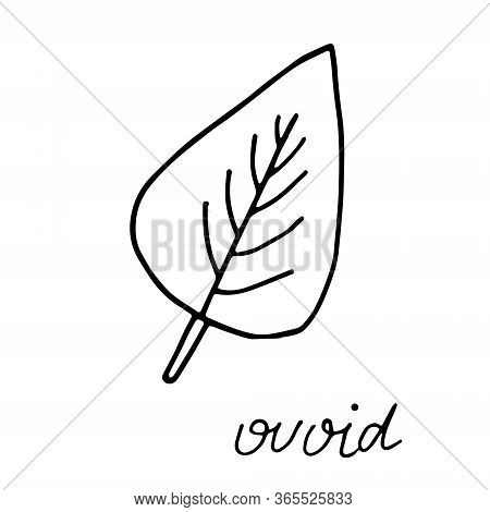 Hand Drawn Doodle Leaf. Black Shape With Different Forms. Ovoid Leaf