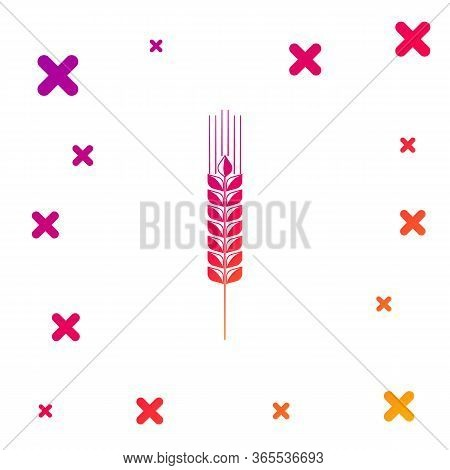 Color Cereals Icon Set With Rice, Wheat, Corn, Oats, Rye, Barley Icon On White Background. Ears Of W