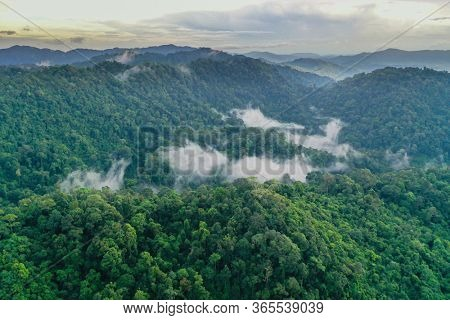 Mountain and rainforest with mist aerial photo