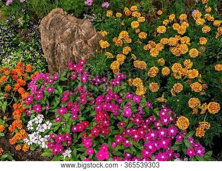 The Colorful Colors Of Watercress Flowers And Other Flowers In The Garden.