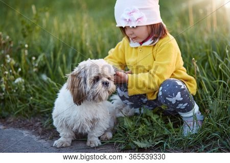 Little Charming Girl Squats At Side Of Road And Pets Her Dog Pekingese, Child Playing With Her Pet I