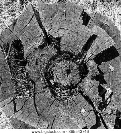 Wooden Circle With A Split Log. Tree Structure. Monochrome
