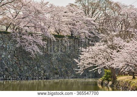 Himeji Castle Stone Walls And Water Moat During The Cherry Blossom Sakura Season In Himeji, Hyogo Pr