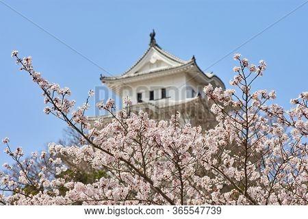 Himeji Castle During The Cherry Blossom Sakura Season