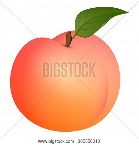 Fresh Peach Icon. Cartoon Of Fresh Peach Vector Icon For Web Design Isolated On White Background