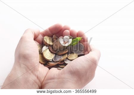 Green Sprout Sprouts From A Pile Of Coins In Hands On A White Background. Isolated. Invest Your Mone