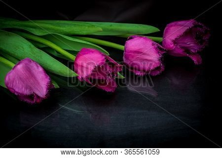 Four Red Tulips On A Black Background. The Theme Of Sorrow And Mourning.