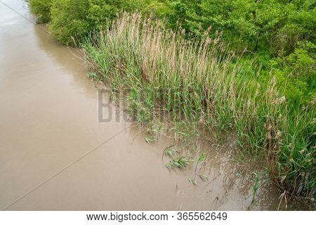 Water Plants On The Coast Of The Rioni River