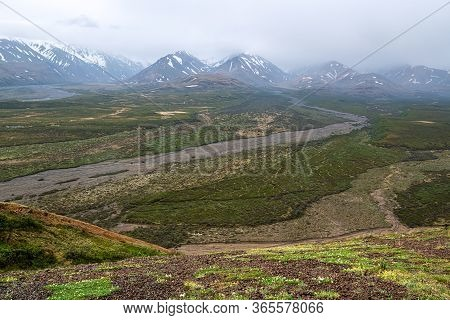 Dry Stream Beds, Wildflowers And Snow Capped Mountains Of Denali National Park In Alaska.
