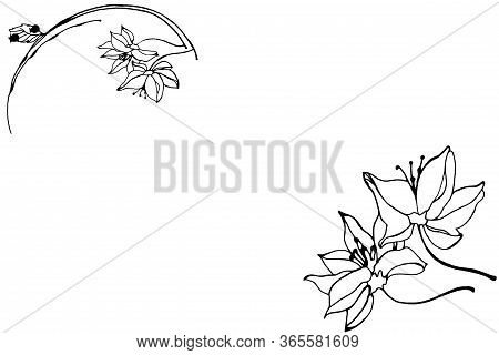 White Background With Flowers And Place For Text.